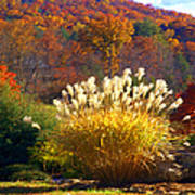 Fall Foilage In The Mountains Art Print