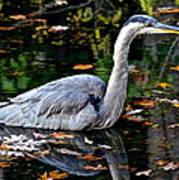 Fall Foliage And Fowl Art Print
