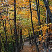 Fall Foliage Colors 03 Art Print
