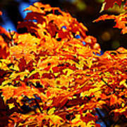 Fall Foliage Colors 16 Art Print by Metro DC Photography