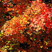 Fall Foliage Colors 21 Art Print