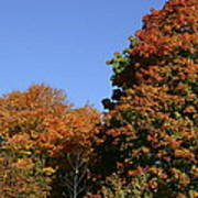Fall Foliage In The Arboretum Art Print