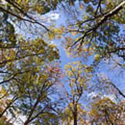 Fall Foliage - Look Up 2 Art Print