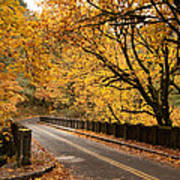 Fall Foliage On The Highway Art Print by Cari Gesch