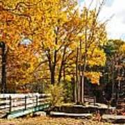 Fall Foliage Vi Art Print