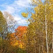 Fall Forest Art Print