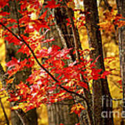 Fall Forest Detail Art Print