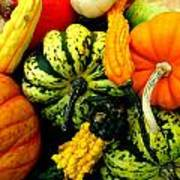 Fall Gourds Art Print