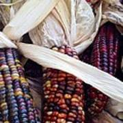 Fall Harvest Corn Art Print
