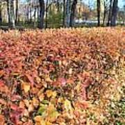 Fall Hedge Art Print