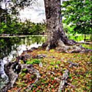 Fall In Audubon Park Art Print by Ray Devlin