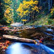 Fall In Bulgarian Forest  Art Print