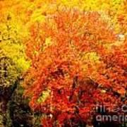 Fall In Full Bloom Art Print