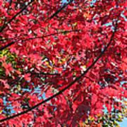 Fall In Illinois Art Print
