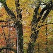 Fall In Kentucky Art Print