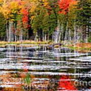 Fall In Maine Art Print by Arie Arik Chen