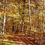 Fall In Michigan Art Print