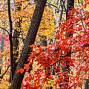 Fall In The Forest Art Print