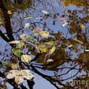 Fall In The Lake In Vienna No. 1 Art Print
