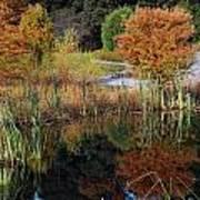 Fall In The Wetlands Art Print