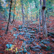 Fall In The Woodlands Art Print