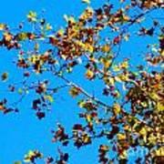 Fall-ing Leaves Art Print