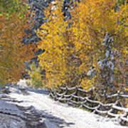 Fall Into Beartrap Meadow - Casper Mountain - Casper Wyoming Art Print