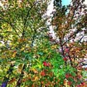 Fall Is Here Art Print