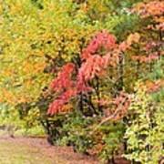 Fall Landscape 3 Art Print