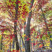 Fall Laser Beams Art Print