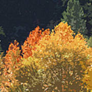 Fall Leave On The East Verde River Art Print