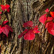 Fall Leaves Against Tree Trunk Art Print