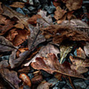 Fall Leaves And Acorns Art Print