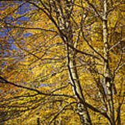 Fall Leaves And Trees In West Michigan No171 Art Print