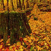 Fall Leaves Mosaic Art Print by Dan Mihai