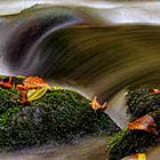 Fall Leaves On Mossy Rocks Art Print