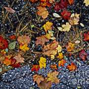 Fall Leaves On Pavement Art Print by Elena Elisseeva