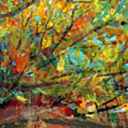 Fall Looking Up Art Print