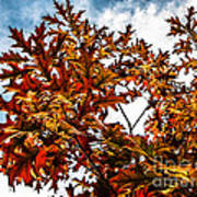 Fall Maple Leaves Art Print