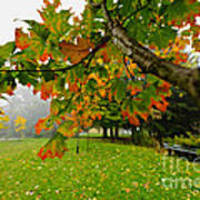 Fall Maple Tree In Foggy Park Art Print by Elena Elisseeva