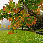 Fall Maple Tree In Foggy Park Art Print