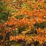 Fall Mix Art Print