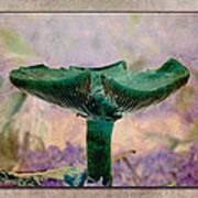 Fall Mushroom 17 Art Print
