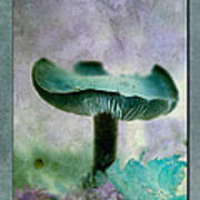 Fall Mushroom 18 Art Print
