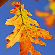 Fall Oak Leaf Art Print