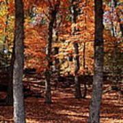 Fall On A Stump Art Print