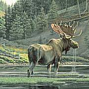 Fall On The Yellowstone Art Print