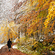 Fall Or Winter - Autumn Colors And Snow In The Forest Art Print