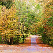 Fall Pathway Art Print by Judy Vincent
