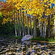 Fall Pond In Mammoth Art Print